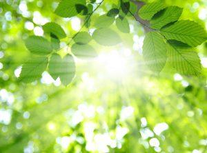 plantas de arvore no sol