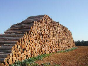 Entre todos os crimes ambientais, o desmatamento e o tráfico de produtos derivados da prática é o segmento que mais movimenta fortunas: entre US$ 50 bilhões e US$ 152 bilhões ao ano (Foto: Killick/FreeImages)