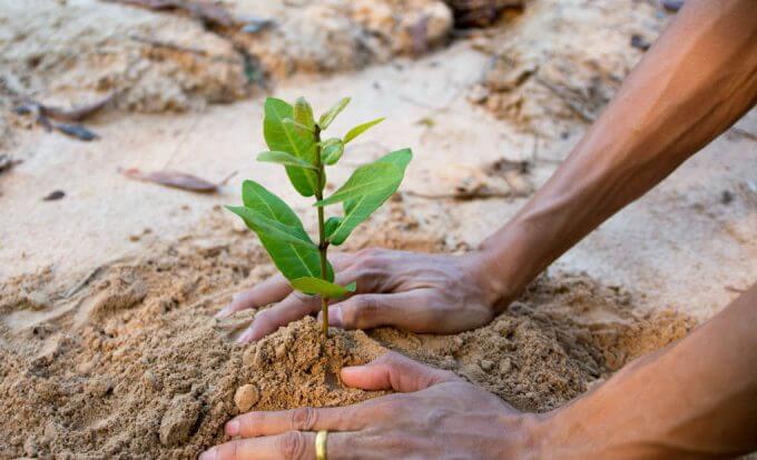 homem planta arvore mao na terra