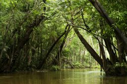 Amazônia tem quase 12 mil diferentes espécies de árvores catalogadas