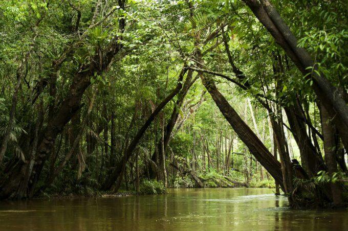 igarape rio corta a floresta amazonica