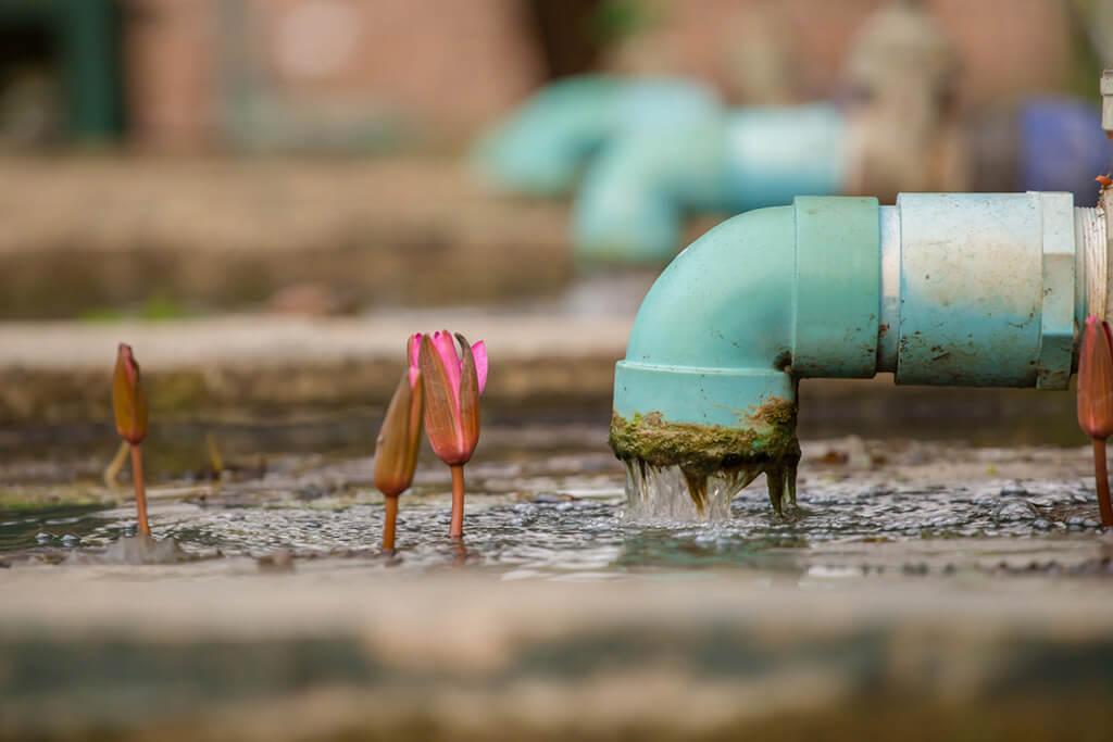 Missão do REPT é melhorar a qualidade de vida humana e ambiental (Foto: Shutterstock)