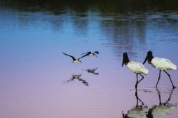 Projeto vai recuperar 700 km de rios no Pantanal