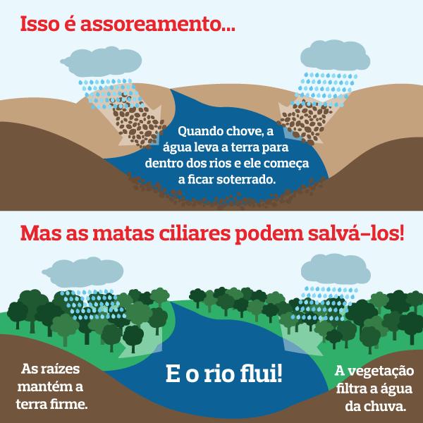 Qual a relação entre árvore e água? - Juntos Pela Água