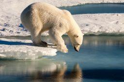 60% das águas do oceano Ártico têm partículas plásticas