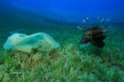 Estudo: mares e rios brasileiros sofrem com poluição por microplásticos