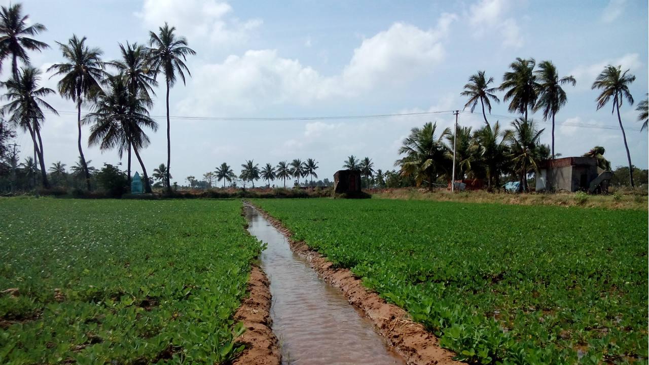 Estudo: agricultura usa mais águas residuais não tratadas do que se imaginava