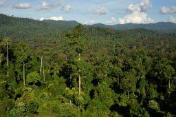 Florestas tropicais geram mais carbono do que capturam, diz estudo