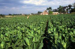 Planta consome 25% menos água com proteína da fotossíntese modificada