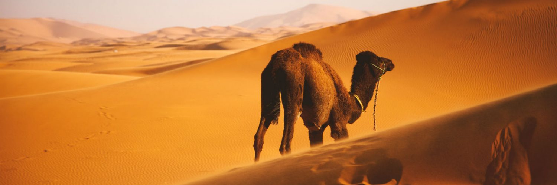 Campos de energia solar e eólica aumentariam chuvas no Saara